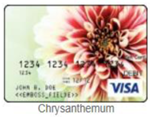 Chrysanthemum gift card